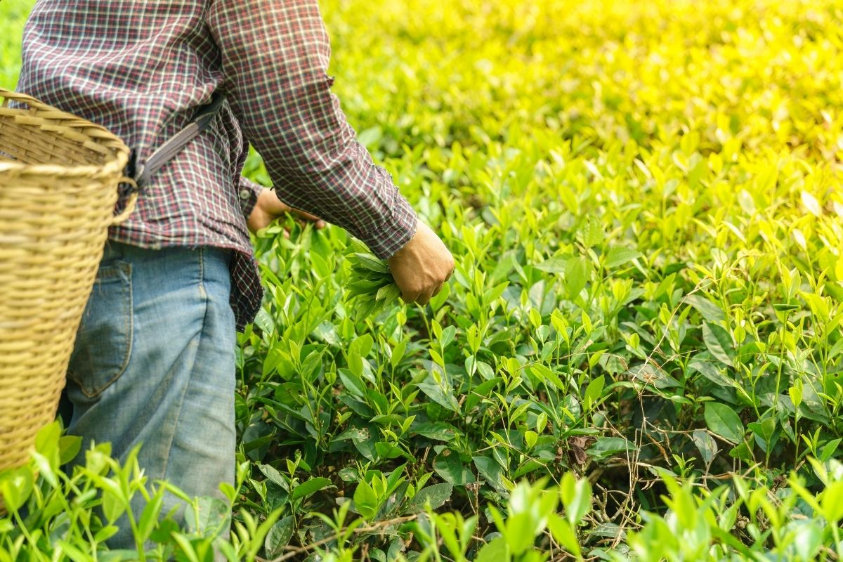 homem colheita quem tem direito a aposentadoria rural venda de precatorios precato